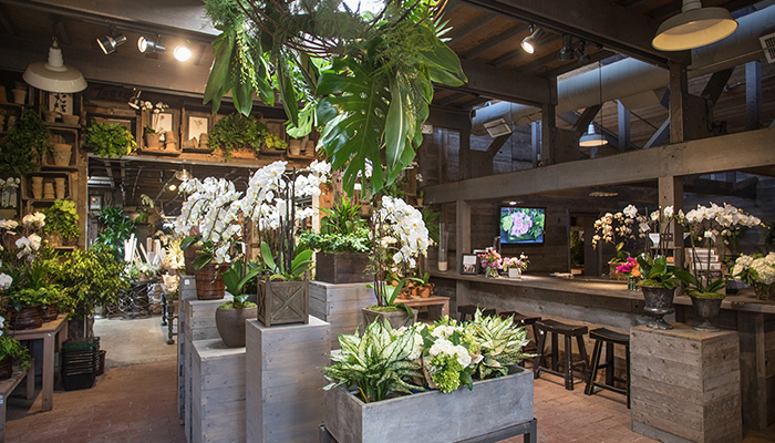 An image of Garden Room One with white orchids on display