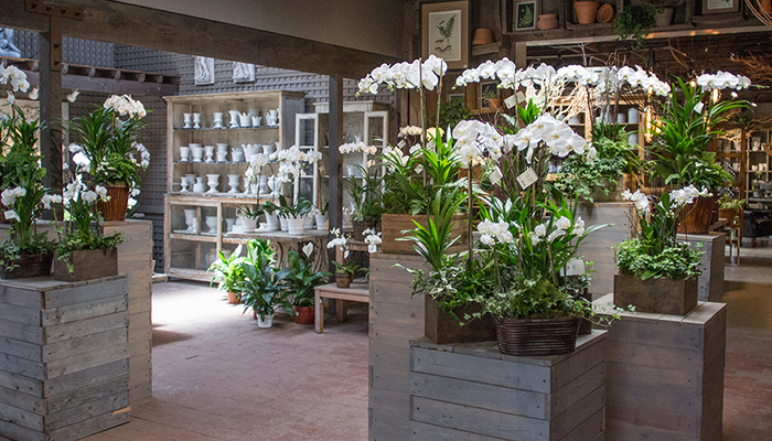 An image of white orchids in Garden Room