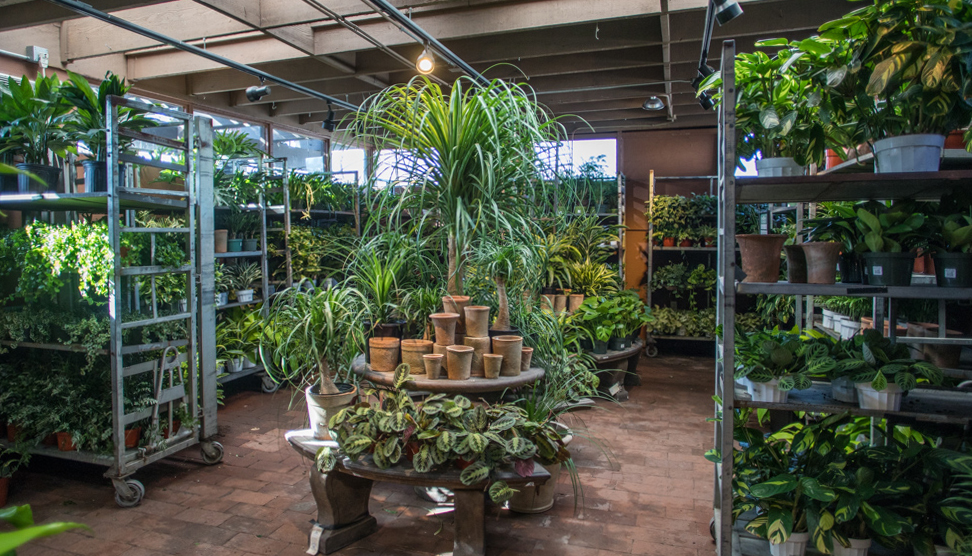 An image all the indoor plants in Garden Room three