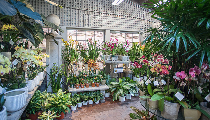 An image of the orchid room in Garden Room One
