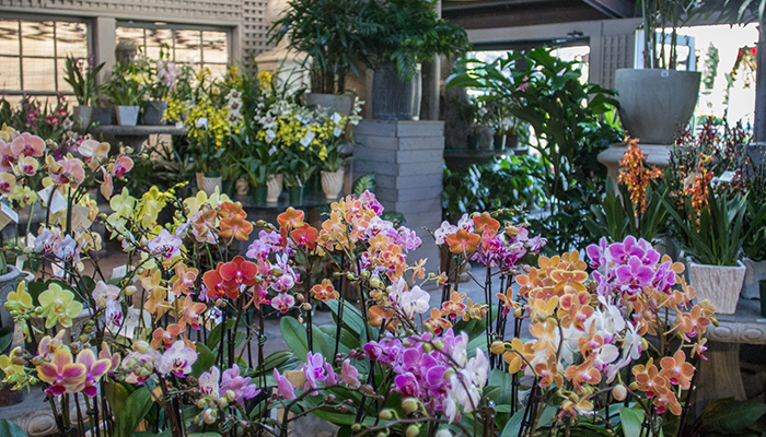 An image of colorful orchids indoor plants