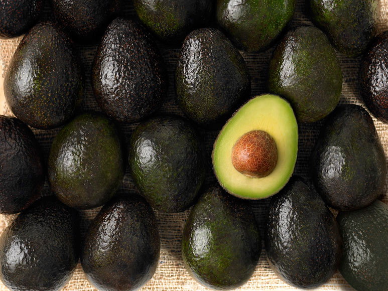 avocados, tree, plants, gardening, nature, january