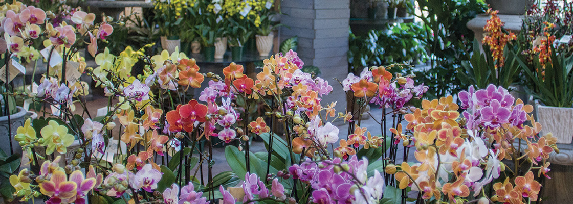 An image of colorful orchids in the Garden Room