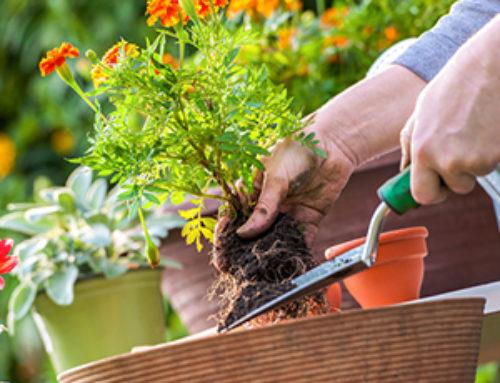 May Gardening Checklist