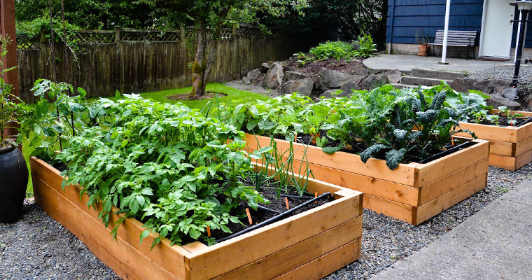 An image of a raided bed garden