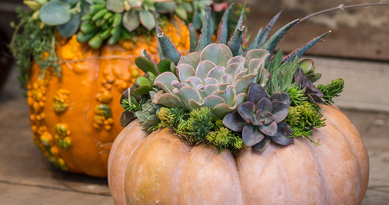 An image of succulents planted in pumpkins workshop