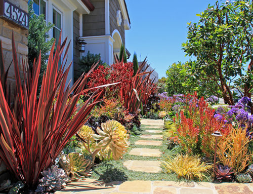 Replace a portion of your lawn with beautiful native and California Friendly plants