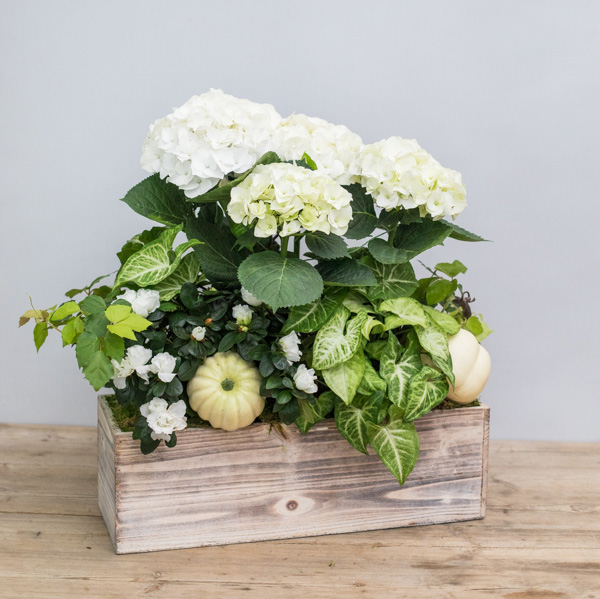 An image of white hydrangeas and pumpkins arrangement