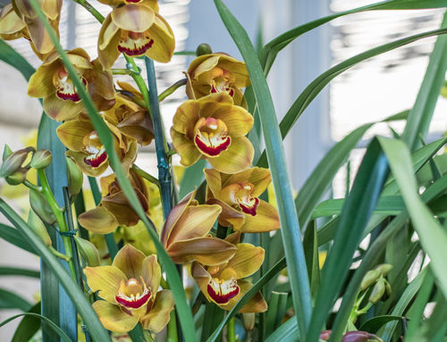 How to Replant Your Orchid