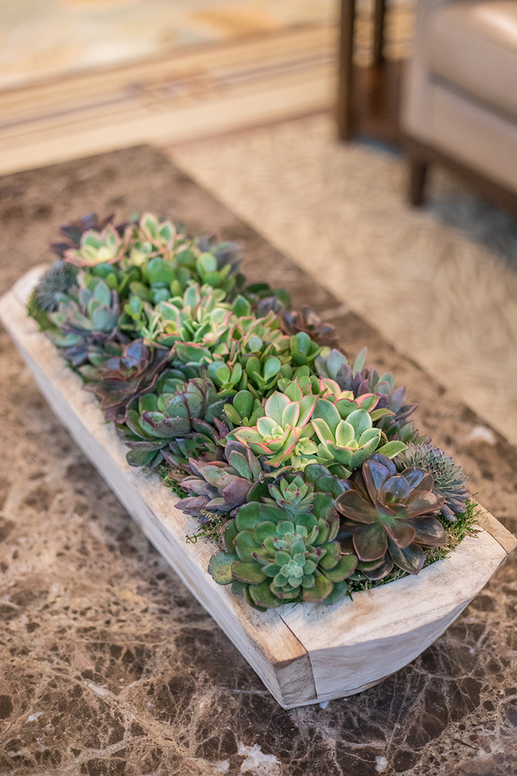 An image of a succulent planted in a wooden tray