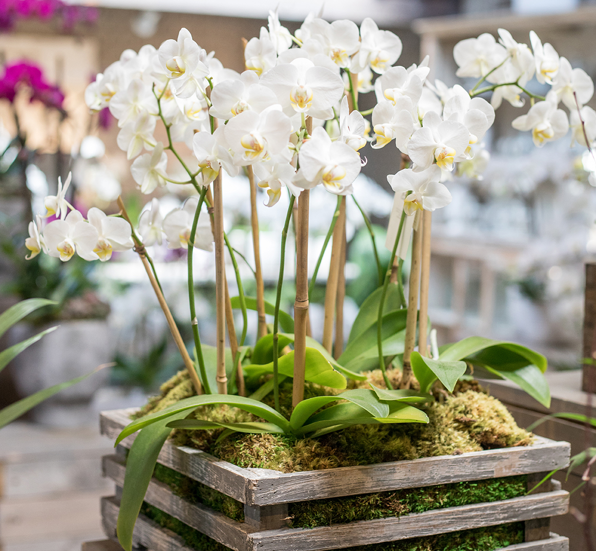 An white orchid arrangement