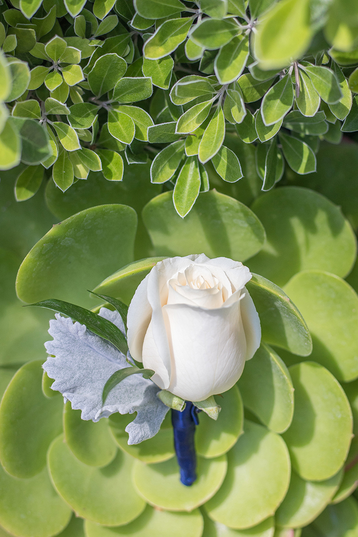 An image of a white rose boutonniere from the Dunzer Wedding