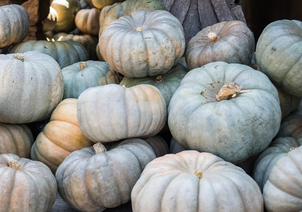An image of grey green pumpkins