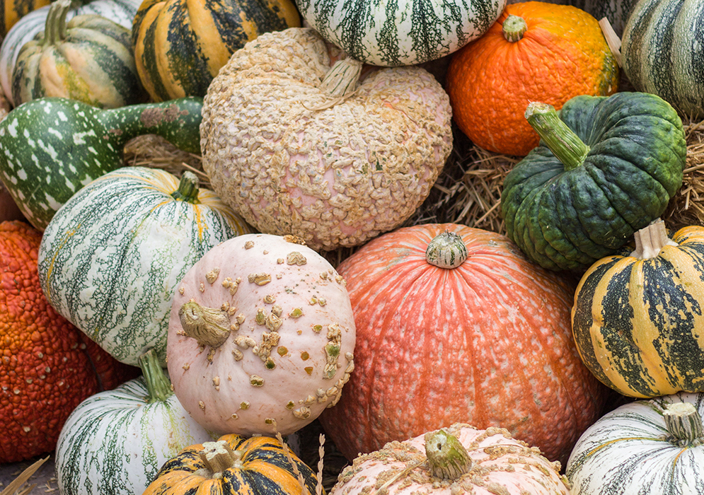 An image of heirloom pumpkins and gourds