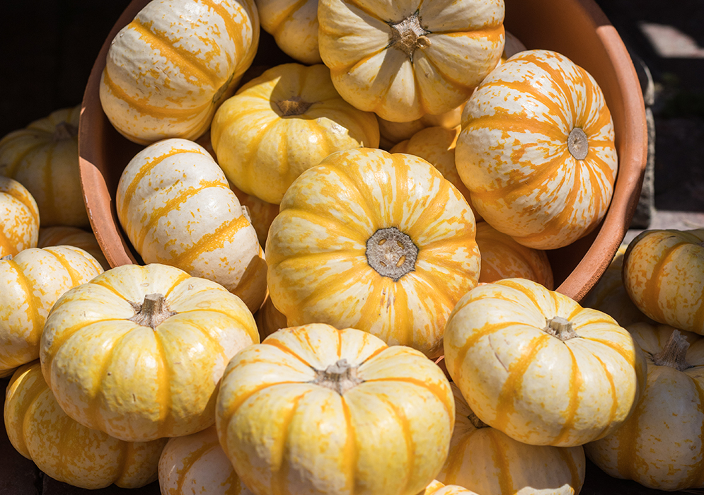 An image of white orange pumpkins