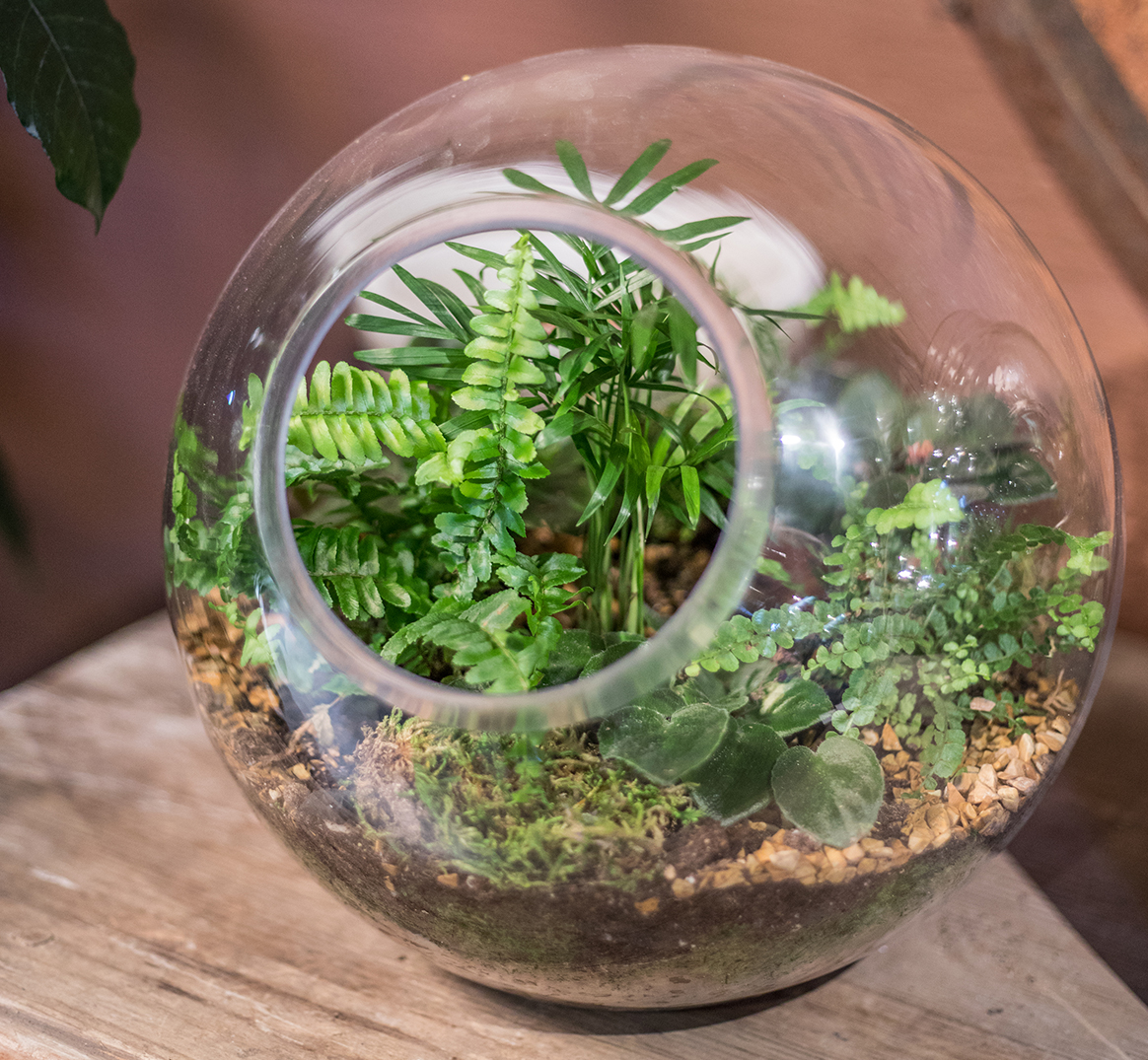 An image of a glass bowl terrariums