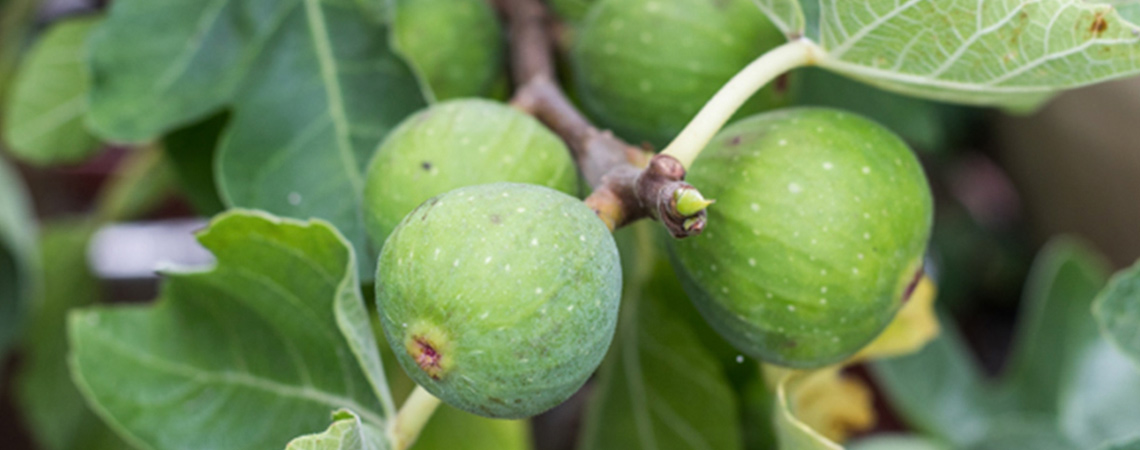 An image of figs