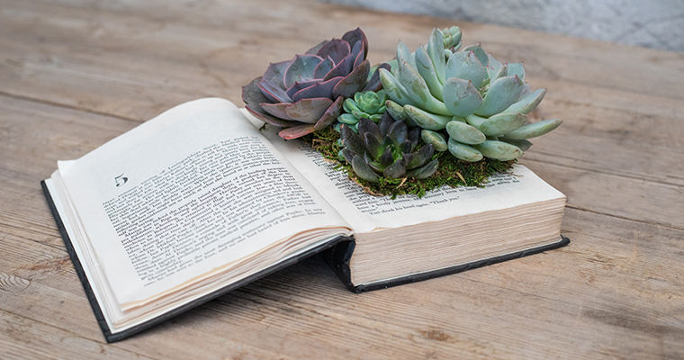An image of a classic succulent book planter workshop