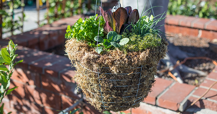 Edible Hanging Baskets Designs with Suzanne Hetrick and Kim Sterling copy