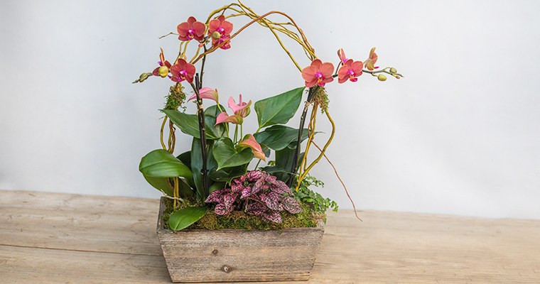 An image of an orange pink orchid for orchid workshop