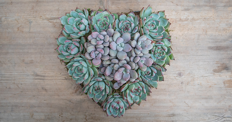 An image of a succulent heart arrangement workshop