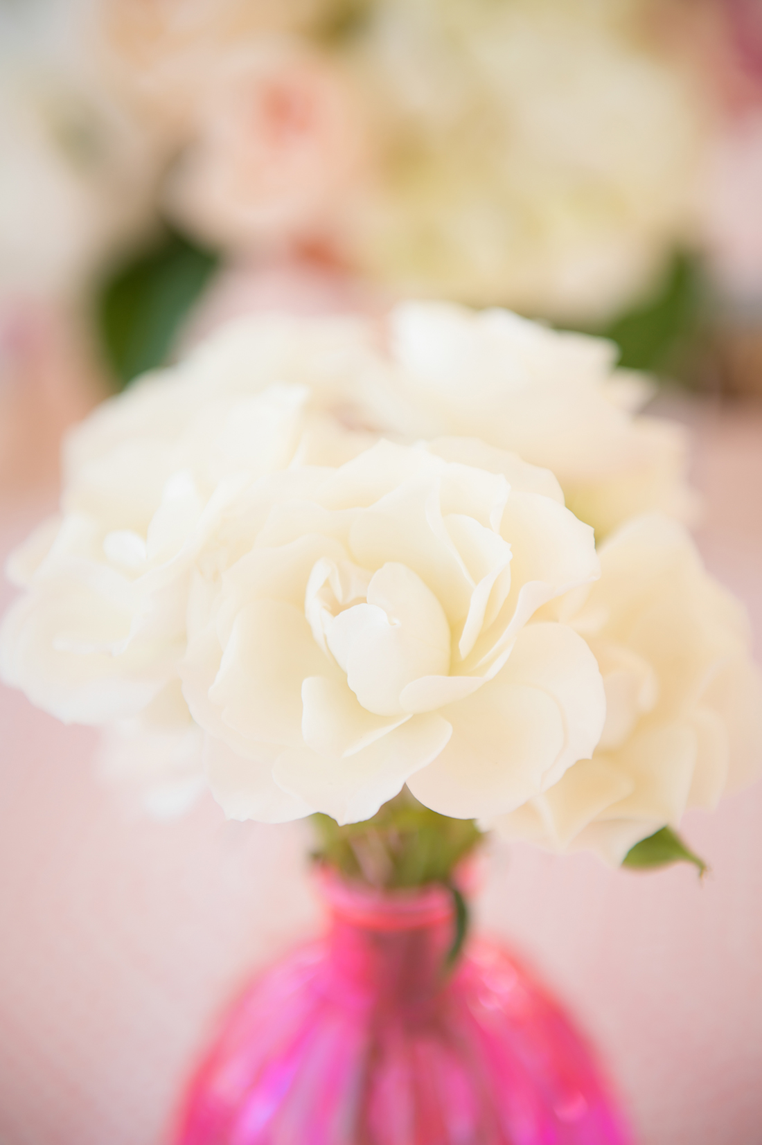A close up image of a white roses for something lovely event