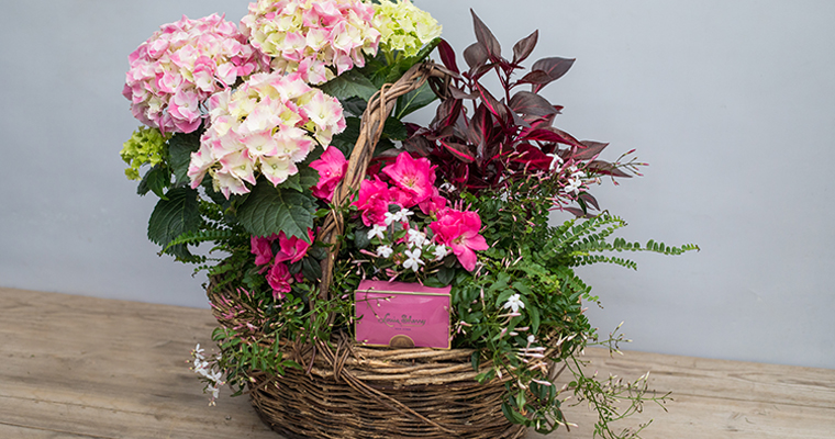 An image of a pink white hydrangea and chocolates for Mother's Day basket
