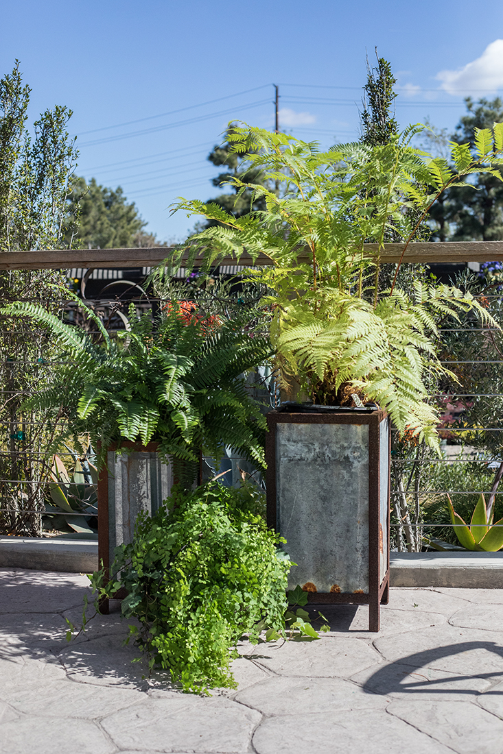 An image of the Forged Greenery event with plants in rustic tin rectangle pots