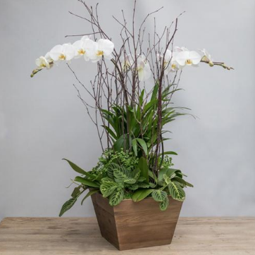 An image of a white orchid in a wooden box planted arrangement
