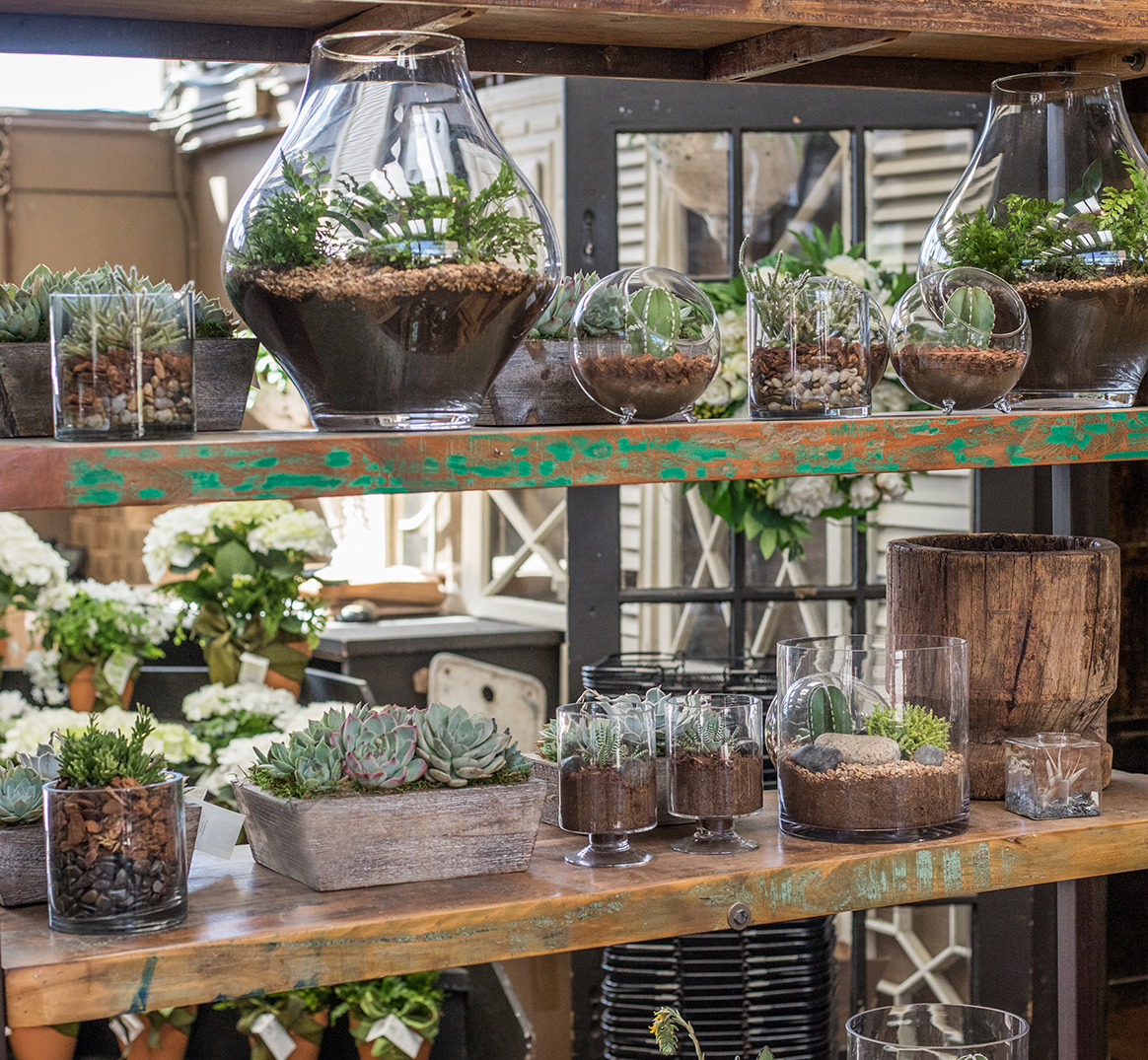 An image of glass terrariums