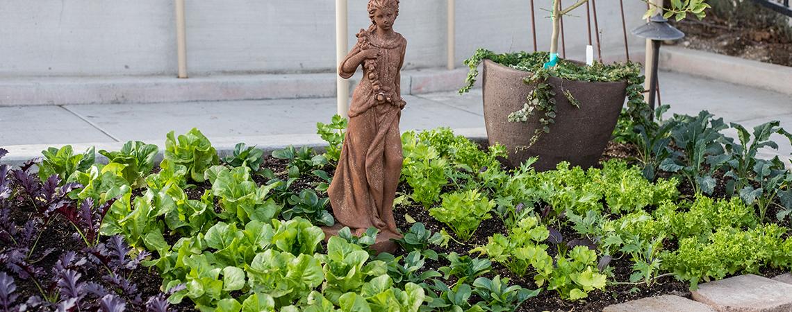 An image of a herb garden