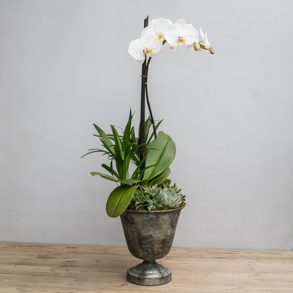 An image of a white orchid with succulents beneath planted arrangement for Mother's Day