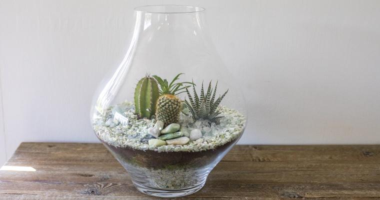 An image of a glass cactus terrarium