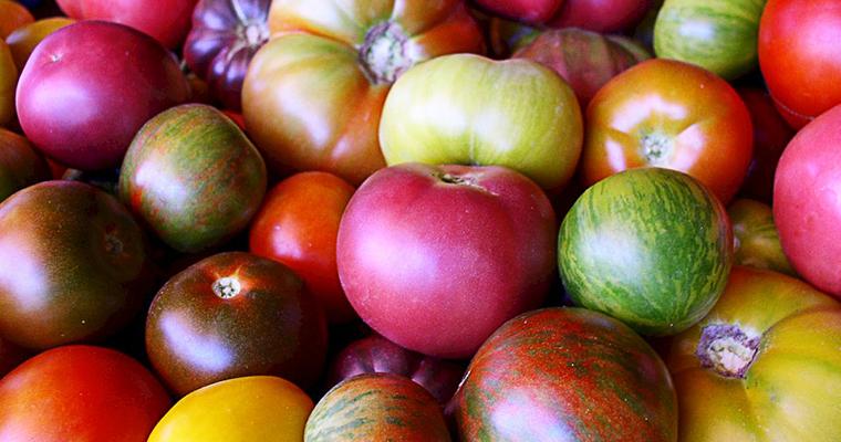 cool season tomatoes planting cool season tomatoes
