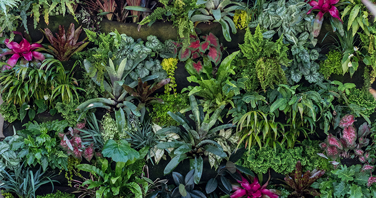 An image of a creative living plant wall