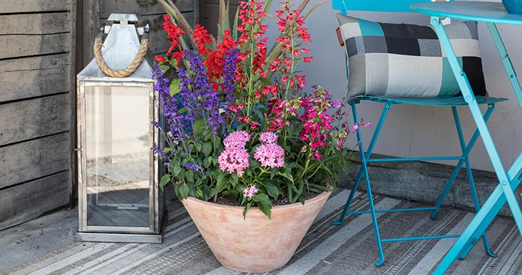 An image of the hummingbird garden and a light blue outdoor living set and outdoor lantern