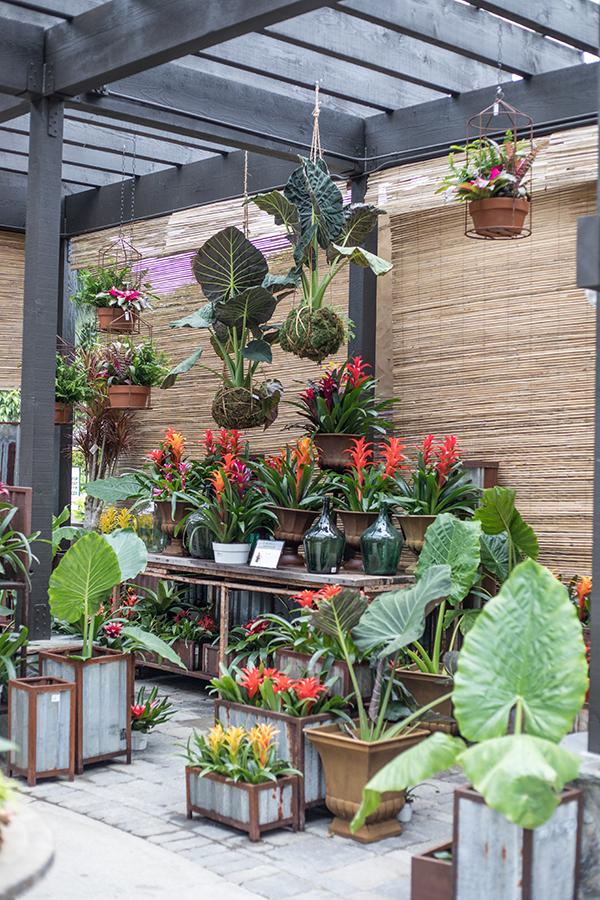 bromeliads tropical plants lush gardens shade garden rogers gardens