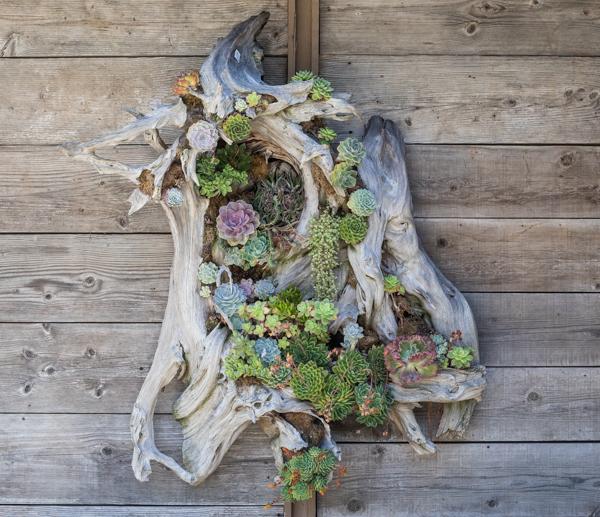 succulent driftwood art garden art succulents rogers gardens