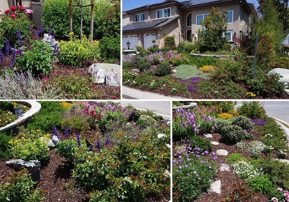 A collage of Simpson entry for California Friendly Garden Contest 2018