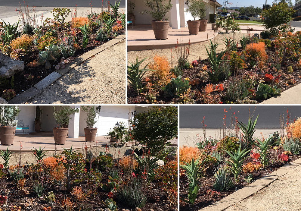 A collage of Tabone entry for California Friendly Garden Contest 2018
