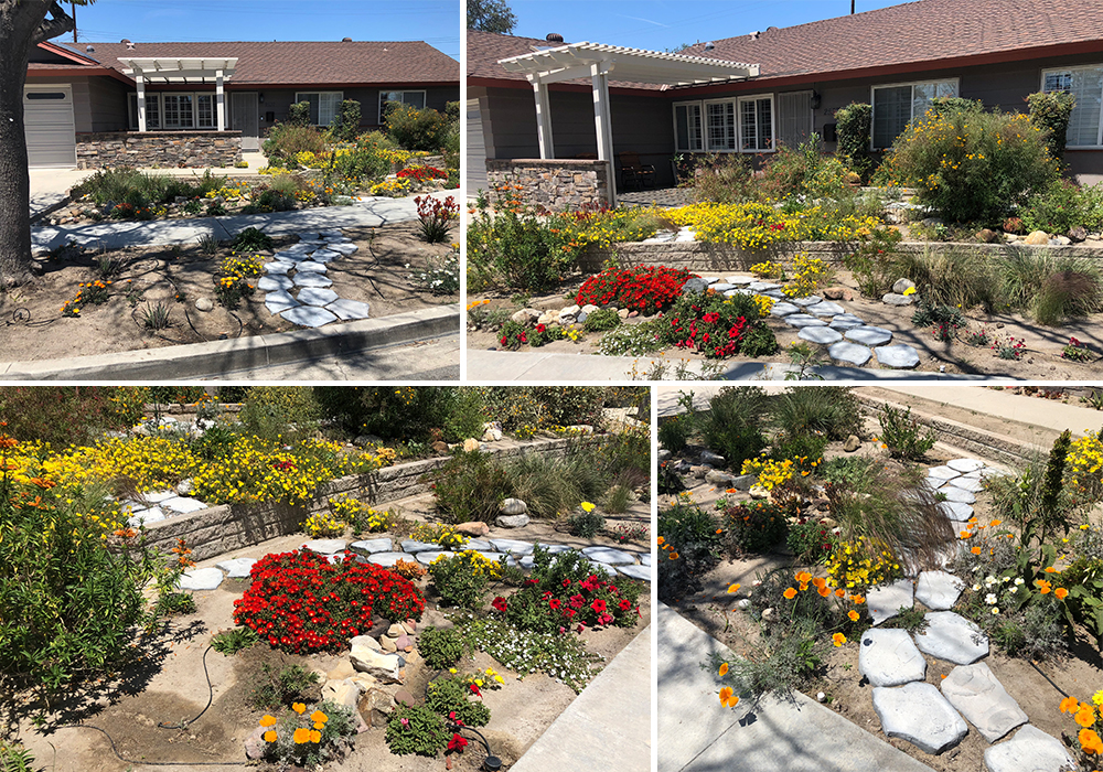 A collage of Tyra entry for California Friendly Garden Contest 2018