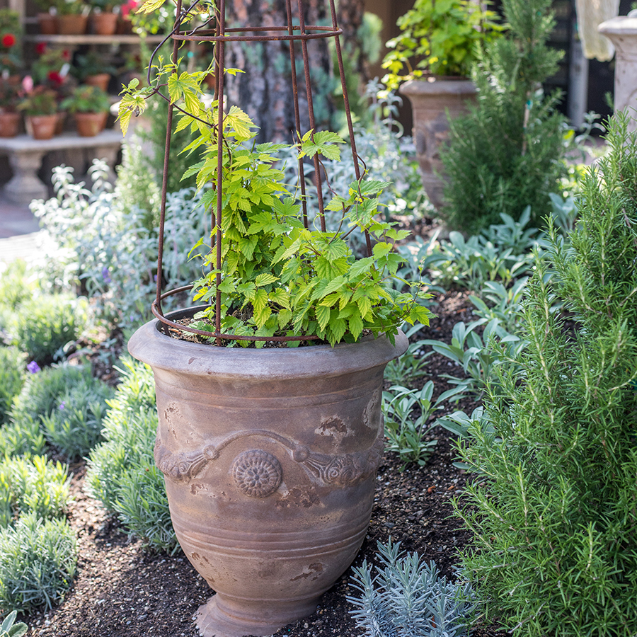 An image of a potted plant in the sensory garden