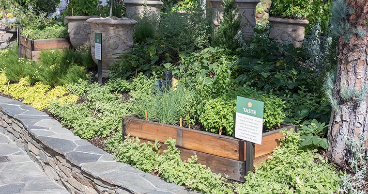 Sensory Garden Roger's Gardens Seminar NEwport beach Gardening
