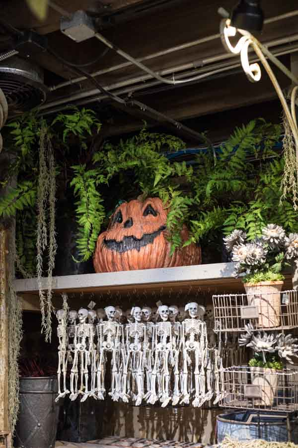 Halloween 2018 - Herbology Greenhouse