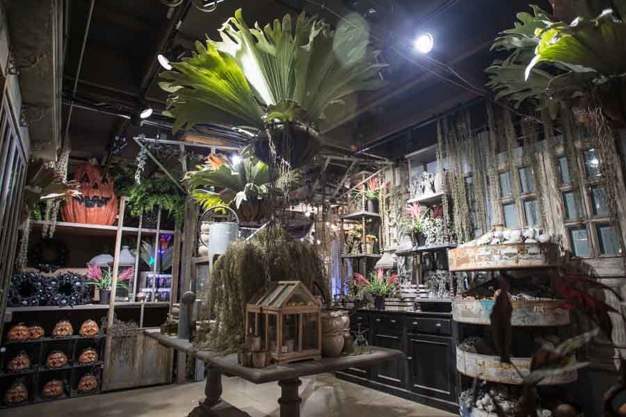 Halloween 2018 - Herbology Greenhouse
