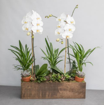 An image of two orchids in a wooden box for signature orchids