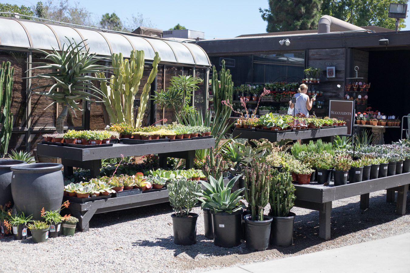 An image of the area outside of Garden Room 3 with succulents
