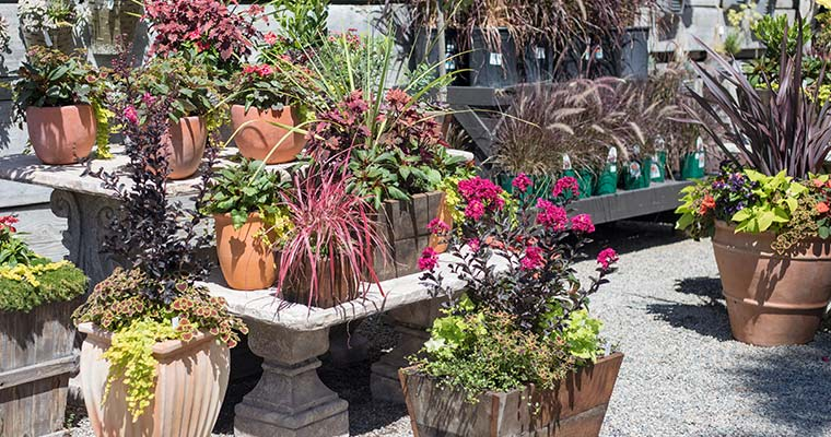 An image of outdoor containers for adding holiday color to your outdoors