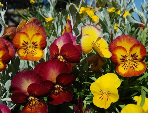 Fall is for Planting – Planting Color for the Cooler Season