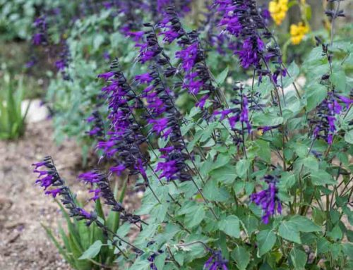 7 Things to Plant this Fall